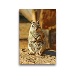 Premium Textil-Leinwand 30 x 45 cm Hoch-Format Goldmantelziesel im Bryce Canyon Nationalpark (USA) | Wandbild, HD-Bild auf Keilrahmen, Fertigbild auf hochwertigem Vlies, Leinwanddruck von Jana Thiem-Eberitsch