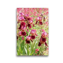 Premium Textil-Leinwand 30 x 45 cm Hoch-Format Iris und Rote Spornblume | Wandbild, HD-Bild auf Keilrahmen, Fertigbild auf hochwertigem Vlies, Leinwanddruck von Gisela Kruse