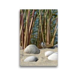 Premium Textil-Leinwand 30 x 45 cm Hoch-Format Muscheln | Wandbild, HD-Bild auf Keilrahmen, Fertigbild auf hochwertigem Vlies, Leinwanddruck von Susanne Herppich
