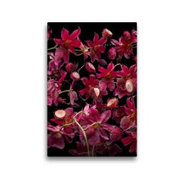 Premium Textil-Leinwand 30 x 45 cm Hoch-Format Orchidea rambutana | Wandbild, HD-Bild auf Keilrahmen, Fertigbild auf hochwertigem Vlies, Leinwanddruck von Olaf Bruhn