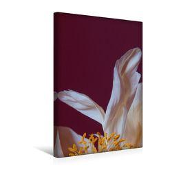 Premium Textil-Leinwand 30 x 45 cm Hoch-Format Pfingstrose, einzelnes Blütenblatt   Wandbild, HD-Bild auf Keilrahmen, Fertigbild auf hochwertigem Vlies, Leinwanddruck von Susanne Stark Sugarsweet – Photo von Stark Sugarsweet - Photo,  Susanne