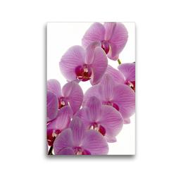 Premium Textil-Leinwand 30 x 45 cm Hoch-Format Phalaenopsis   Wandbild, HD-Bild auf Keilrahmen, Fertigbild auf hochwertigem Vlies, Leinwanddruck von Veronika Rix