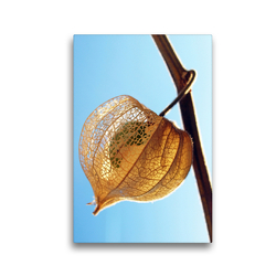 Premium Textil-Leinwand 30 x 45 cm Hoch-Format Physalis im Sonnenlicht | Wandbild, HD-Bild auf Keilrahmen, Fertigbild auf hochwertigem Vlies, Leinwanddruck von Dagmar Laimgruber