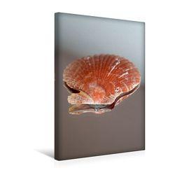 Premium Textil-Leinwand 30 x 45 cm Hoch-Format Scallop, Kroatien   Wandbild, HD-Bild auf Keilrahmen, Fertigbild auf hochwertigem Vlies, Leinwanddruck von Christine Daus von Daus,  Christine