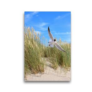 Premium Textil-Leinwand 30 x 45 cm Hoch-Format Seeschwalbe | Wandbild, HD-Bild auf Keilrahmen, Fertigbild auf hochwertigem Vlies, Leinwanddruck von Susanne Herppich