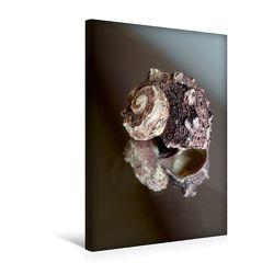Premium Textil-Leinwand 30 x 45 cm Hoch-Format Shells auf dem Spiegel | Wandbild, HD-Bild auf Keilrahmen, Fertigbild auf hochwertigem Vlies, Leinwanddruck von Christine Daus