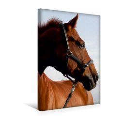 Premium Textil-Leinwand 30 x 45 cm Hoch-Format Springpferd | Wandbild, HD-Bild auf Keilrahmen, Fertigbild auf hochwertigem Vlies, Leinwanddruck von Christine Daus von Daus,  Christine