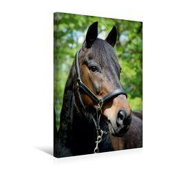 Premium Textil-Leinwand 30 x 45 cm Hoch-Format Traumhafte Pferdeportraits | Wandbild, HD-Bild auf Keilrahmen, Fertigbild auf hochwertigem Vlies, Leinwanddruck von Christine Daus von Daus,  Christine