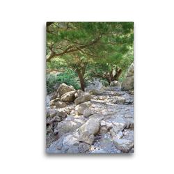 Premium Textil-Leinwand 30 x 45 cm Hoch-Format Uralten Bäumen am Pfad in der Samaria-.Schlucht auf Kreta   Wandbild, HD-Bild auf Keilrahmen, Fertigbild auf hochwertigem Vlies, Leinwanddruck von Anja Frost