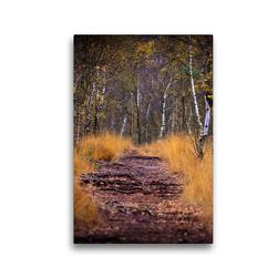Premium Textil-Leinwand 30 x 45 cm Hoch-Format Wege im Moor | Wandbild, HD-Bild auf Keilrahmen, Fertigbild auf hochwertigem Vlies, Leinwanddruck von Gero von Kitzing