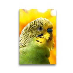 Premium Textil-Leinwand 30 x 45 cm Hoch-Format Wellensittich – Portrait eines grünes Welliküken | Wandbild, HD-Bild auf Keilrahmen, Fertigbild auf hochwertigem Vlies, Leinwanddruck von Björn Bergmann