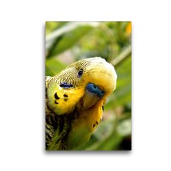 Premium Textil-Leinwand 30 x 45 cm Hoch-Format Wellensittich Portrait | Wandbild, HD-Bild auf Keilrahmen, Fertigbild auf hochwertigem Vlies, Leinwanddruck von Björn Bergmann