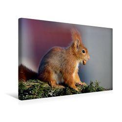 Premium Textil-Leinwand 45 cm x 30 cm quer, Päuschen in der Sonne | Wandbild, Bild auf Keilrahmen, Fertigbild auf echter Leinwand, Leinwanddruck von CALVENDO