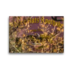 Premium Textil-Leinwand 45 x 30 cm Quer-Format Adler-und Ratsapotheke | Wandbild, HD-Bild auf Keilrahmen, Fertigbild auf hochwertigem Vlies, Leinwanddruck von ReDi Fotografie