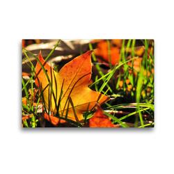 Premium Textil-Leinwand 45 x 30 cm Quer-Format Ahornblatt | Wandbild, HD-Bild auf Keilrahmen, Fertigbild auf hochwertigem Vlies, Leinwanddruck von Sabine Löwer