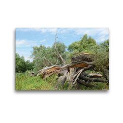 Premium Textil-Leinwand 45 x 30 cm Quer-Format Alte Weide vom Sturm zerbrochen | Wandbild, HD-Bild auf Keilrahmen, Fertigbild auf hochwertigem Vlies, Leinwanddruck von Anja Frost