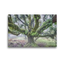 Premium Textil-Leinwand 45 x 30 cm Quer-Format Alter Lorbeerbaum im Nebel | Wandbild, HD-Bild auf Keilrahmen, Fertigbild auf hochwertigem Vlies, Leinwanddruck von Juergen Schonnop