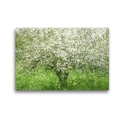 Premium Textil-Leinwand 45 x 30 cm Quer-Format Apfelbaum | Wandbild, HD-Bild auf Keilrahmen, Fertigbild auf hochwertigem Vlies, Leinwanddruck von Franziska Lenferink