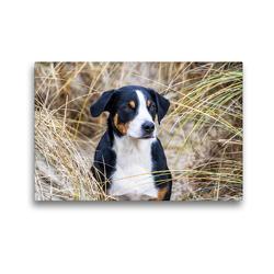 Premium Textil-Leinwand 45 x 30 cm Quer-Format Appenzeller Sennenhund | Wandbild, HD-Bild auf Keilrahmen, Fertigbild auf hochwertigem Vlies, Leinwanddruck von SchnelleWelten