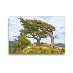 Premium Textil-Leinwand 45 x 30 cm Quer-Format Arboles Banderas – die durch starken Wind geformten Bäume Patagoniens   Wandbild, HD-Bild auf Keilrahmen, Fertigbild auf hochwertigem Vlies, Leinwanddruck von CALVENDO