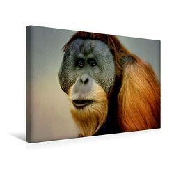 Premium Textil-Leinwand 45 x 30 cm Quer-Format Aufmerksamer Orang Utan | Wandbild, HD-Bild auf Keilrahmen, Fertigbild auf hochwertigem Vlies, Leinwanddruck von Heike Hultsch von Hultsch,  Heike