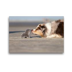Premium Textil-Leinwand 45 x 30 cm Quer-Format Australian Shepherd 2017 | Wandbild, HD-Bild auf Keilrahmen, Fertigbild auf hochwertigem Vlies, Leinwanddruck von Annett Mirsberger