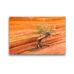 Premium Textil-Leinwand 45 x 30 cm Quer-Format Bäume in der Welt, the Wave Arizona | Wandbild, HD-Bild auf Keilrahmen, Fertigbild auf hochwertigem Vlies, Leinwanddruck von Björn Alicke