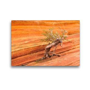 Premium Textil-Leinwand 45 x 30 cm Quer-Format Bäume in der Welt, the Wave Arizona   Wandbild, HD-Bild auf Keilrahmen, Fertigbild auf hochwertigem Vlies, Leinwanddruck von Björn Alicke