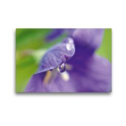 Premium Textil-Leinwand 45 x 30 cm Quer-Format Ballonblume | Wandbild, HD-Bild auf Keilrahmen, Fertigbild auf hochwertigem Vlies, Leinwanddruck von Susanne Herppich
