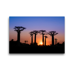 Premium Textil-Leinwand 45 x 30 cm Quer-Format Baobab – Allee | Wandbild, HD-Bild auf Keilrahmen, Fertigbild auf hochwertigem Vlies, Leinwanddruck von Rolf Dietz