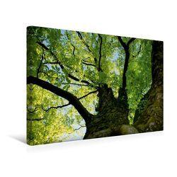 Premium Textil-Leinwand 45 x 30 cm Quer-Format Baumkrone | Wandbild, HD-Bild auf Keilrahmen, Fertigbild auf hochwertigem Vlies, Leinwanddruck von Susan Michel / CH von Michel / CH,  Susan
