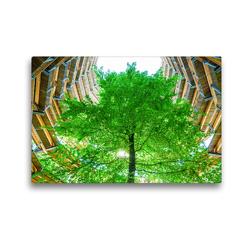 Premium Textil-Leinwand 45 x 30 cm Quer-Format Baumwipfelpfad | Wandbild, HD-Bild auf Keilrahmen, Fertigbild auf hochwertigem Vlies, Leinwanddruck von Christian Müller