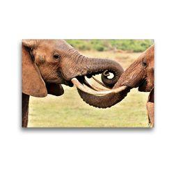 Premium Textil-Leinwand 45 x 30 cm Quer-Format Begrüßung zweier Elefanten | Wandbild, HD-Bild auf Keilrahmen, Fertigbild auf hochwertigem Vlies, Leinwanddruck von Jürgen Feuerer