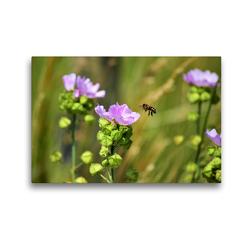 Premium Textil-Leinwand 45 x 30 cm Quer-Format Biene im Anflug | Wandbild, HD-Bild auf Keilrahmen, Fertigbild auf hochwertigem Vlies, Leinwanddruck von Marlise Gaudig