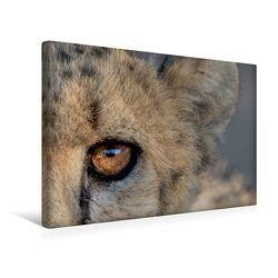 Premium Textil-Leinwand 45 x 30 cm Quer-Format BIG CATS – Namibias Raubkatzen   Wandbild, HD-Bild auf Keilrahmen, Fertigbild auf hochwertigem Vlies, Leinwanddruck von Irma van der Wiel von van der Wiel,  Irma