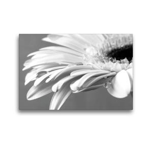 Premium Textil-Leinwand 45 x 30 cm Quer-Format Blüte einer weißen Gerbera | Wandbild, HD-Bild auf Keilrahmen, Fertigbild auf hochwertigem Vlies, Leinwanddruck von Susanne Herppich