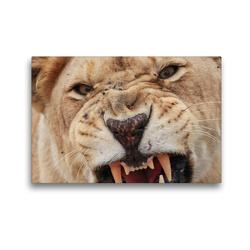 Premium Textil-Leinwand 45 x 30 cm Quer-Format Braune Löwin | Wandbild, HD-Bild auf Keilrahmen, Fertigbild auf hochwertigem Vlies, Leinwanddruck von Barbara Fraatz