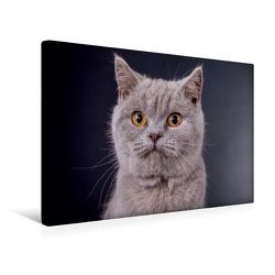 Premium Textil-Leinwand 45 x 30 cm Quer-Format Britisch Kurzhaar Katzen | Wandbild, HD-Bild auf Keilrahmen, Fertigbild auf hochwertigem Vlies, Leinwanddruck von Gabriela Wejat-Zaretzke von Wejat-Zaretzke,  Gabriela