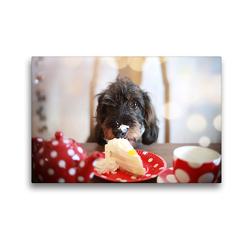 Premium Textil-Leinwand 45 x 30 cm Quer-Format Brutus kann der süßen Versuchung nicht widerstehen | Wandbild, HD-Bild auf Keilrahmen, Fertigbild auf hochwertigem Vlies, Leinwanddruck von Anja Foto Grafia Fotografie