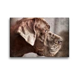 Premium Textil-Leinwand 45 x 30 cm Quer-Format Deutsche Dogge | Wandbild, HD-Bild auf Keilrahmen, Fertigbild auf hochwertigem Vlies, Leinwanddruck von Kattobello