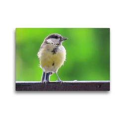 Premium Textil-Leinwand 45 x 30 cm Quer-Format Die Kohlmeise auf Besuch | Wandbild, HD-Bild auf Keilrahmen, Fertigbild auf hochwertigem Vlies, Leinwanddruck von Claudia Schimmack