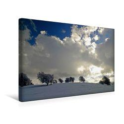 Premium Textil-Leinwand 45 x 30 cm Quer-Format Die Wetterbuchen am Schauinsland | Wandbild, HD-Bild auf Keilrahmen, Fertigbild auf hochwertigem Vlies, Leinwanddruck von Ingo Laue