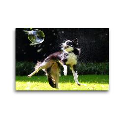 Premium Textil-Leinwand 45 x 30 cm Quer-Format dogs bubble | Wandbild, HD-Bild auf Keilrahmen, Fertigbild auf hochwertigem Vlies, Leinwanddruck von boris robert