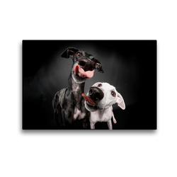 Premium Textil-Leinwand 45 x 30 cm Quer-Format Doppelter Windhundkuss | Wandbild, HD-Bild auf Keilrahmen, Fertigbild auf hochwertigem Vlies, Leinwanddruck von Marcus Gier