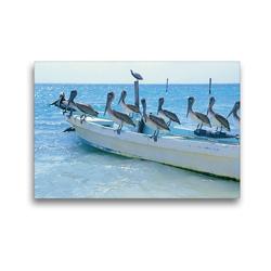 Premium Textil-Leinwand 45 x 30 cm Quer-Format Drollige Pelikane lassen sich auf einem Fischerboot nieder | Wandbild, HD-Bild auf Keilrahmen, Fertigbild auf hochwertigem Vlies, Leinwanddruck von CALVENDO