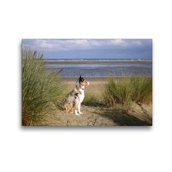 Premium Textil-Leinwand 45 x 30 cm Quer-Format Ein Hund beobachtet den Strand | Wandbild, HD-Bild auf Keilrahmen, Fertigbild auf hochwertigem Vlies, Leinwanddruck von Susanne Herppich