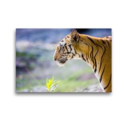Premium Textil-Leinwand 45 x 30 cm Quer-Format Ein Tiger macht nur bei jedem zehnten Versuch Beute. | Wandbild, HD-Bild auf Keilrahmen, Fertigbild auf hochwertigem Vlies, Leinwanddruck von Stefan Schütter