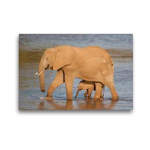 Premium Textil-Leinwand 45 x 30 cm Quer-Format Emotionale Momente: Aus dem Leben der Elefanten. / CH-Version | Wandbild, HD-Bild auf Keilrahmen, Fertigbild auf hochwertigem Vlies, Leinwanddruck von Ingo Gerlach GDT