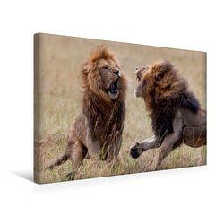 Premium Textil-Leinwand 45 x 30 cm Quer-Format Emotionale Momente: Löwenkampf & Löwenliebe / CH-Version | Wandbild, HD-Bild auf Keilrahmen, Fertigbild auf hochwertigem Vlies, Leinwanddruck von Ingo Gerlach GDT von Gerlach GDT,  Ingo