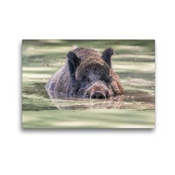 Premium Textil-Leinwand 45 x 30 cm Quer-Format Emotionale Momente: Wildschweine im Wasser | Wandbild, HD-Bild auf Keilrahmen, Fertigbild auf hochwertigem Vlies, Leinwanddruck von Ingo Gerlach